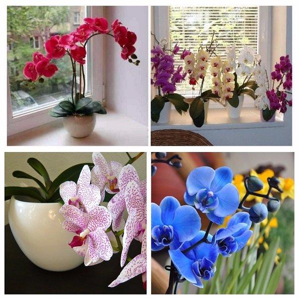 Неживые цветы в доме и приметы о них — стоит ли обзаводиться таким декором