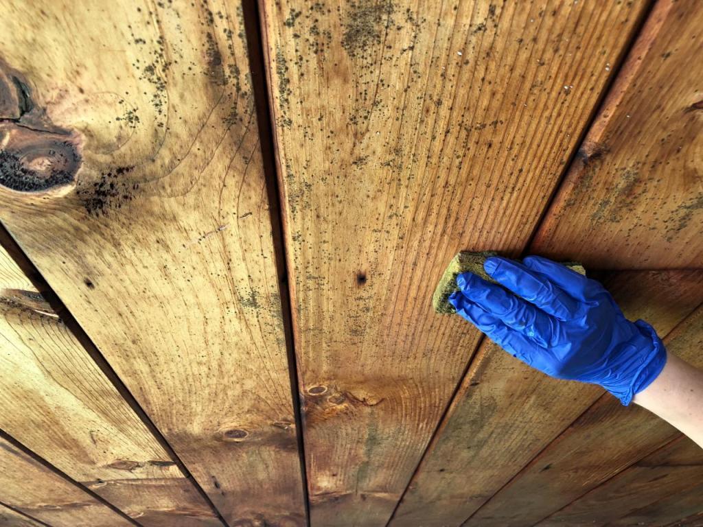 Чем убрать плесень с дерева в бане, в погребе и в квартире на стенах, на обоях и на потолке? / как избавиться от черной и зеленой плесени и ее запаха? видео
