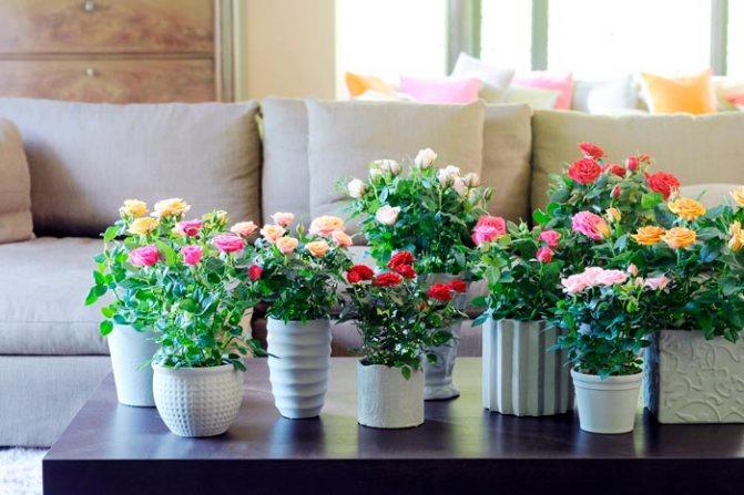 Маст-хэв: какие цветы обязательно должны быть в доме?