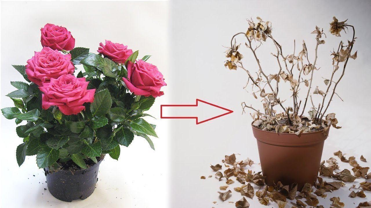 Искусственные цветы — приметы, о которых нужно знать, перед покупкой