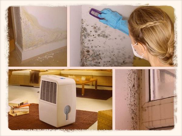 Повышенная влажность в доме